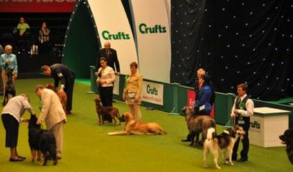 Crufts The NEC Birmingham